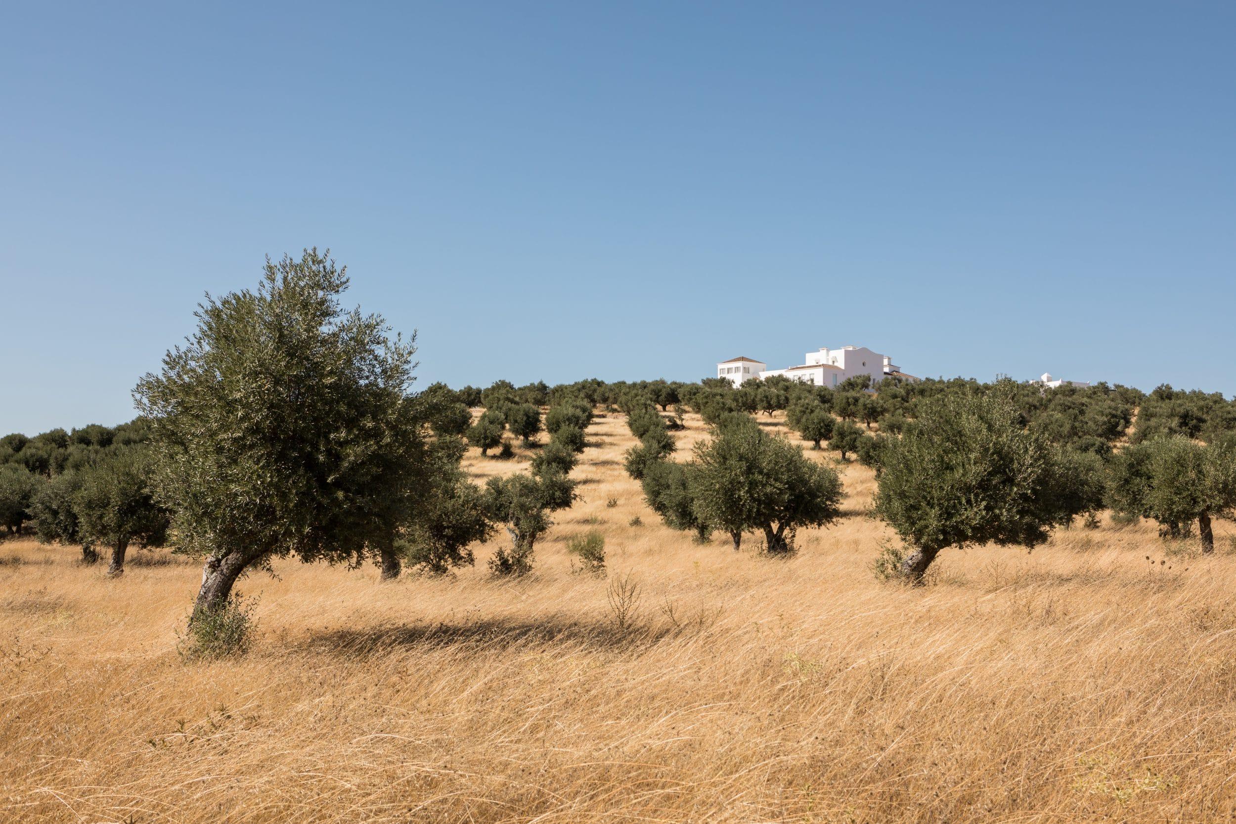 Dalicenca fields building