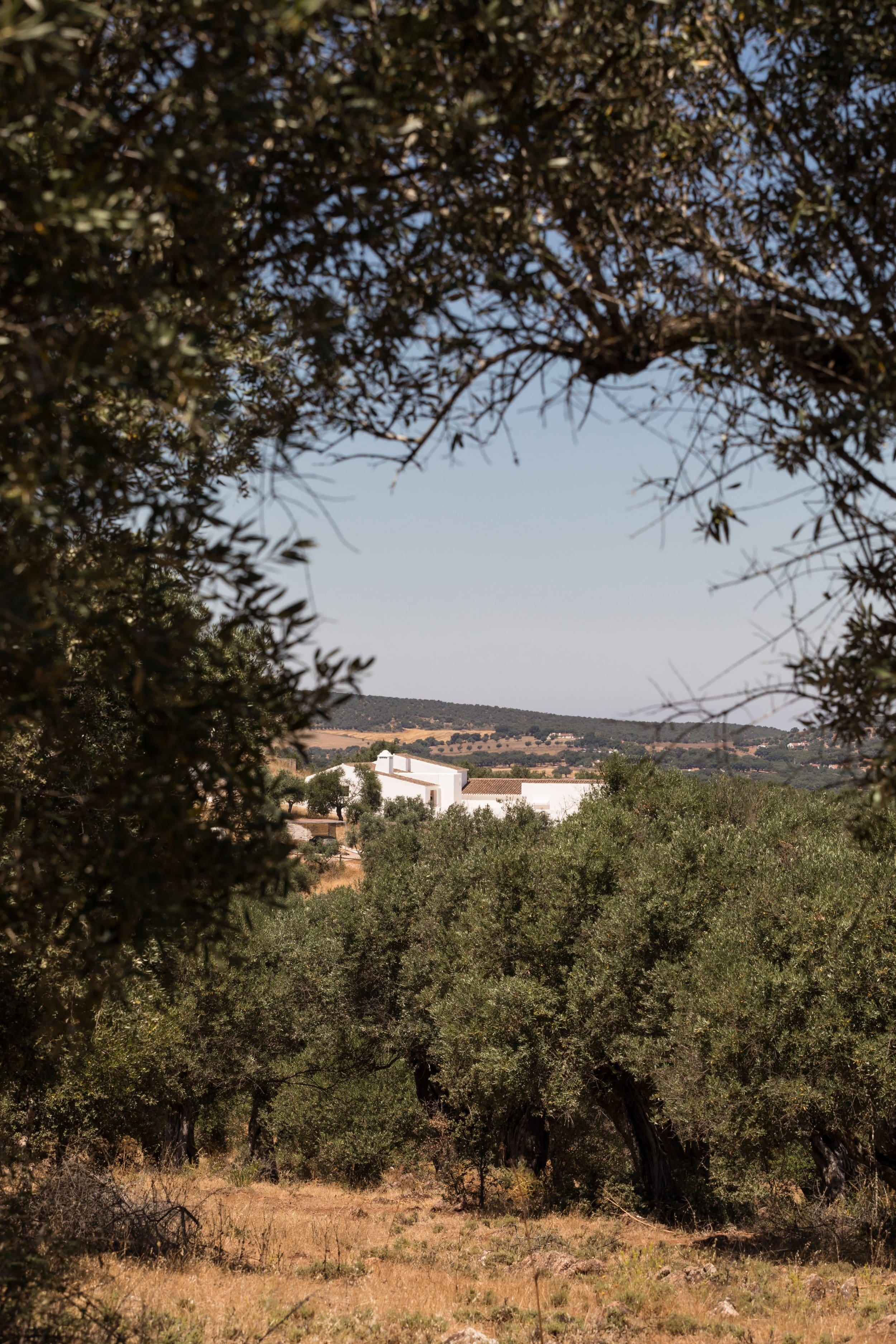 Dalicenca view trees